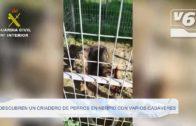 La Guardia Civil descubre en Nerpio un criadero de perros ilegal con varios muertos