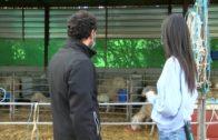 #03 Sobre el Terreno | Sierra de Alcaraz, el gran olivar de Castilla-La Mancha