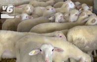 BREVES | Los ganaderos de Albacete reciben las ayudas de la PAC