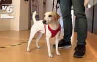 Pipper, el perro influencer, visita Albacete