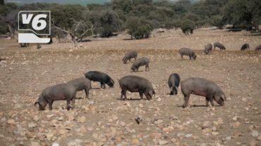 Jornada de información en UPA sobre la geolocalización del ganado