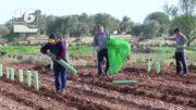 Sin solución para los temporeros ante la llegada de las campañas agrícolas