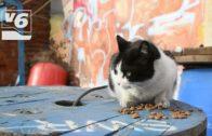 Dejando Huella, al límite en el cuidado de colonias felinas