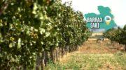 SOBRE EL TERRENO | Visitamos una explotación de pistachos en Barrax
