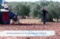 AGRICULTURA | Estiman un descenso del 20% en la campaña vitivinícola