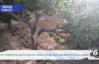 TEMPORAL | Las tormentas dejan graves daños en cultivos de muchas localidades