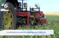 BREVES | 27 detenidos mientras recogían ajo en Albacete
